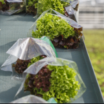Hydroponics packing and marketing strategy